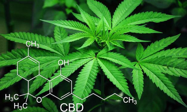 CBD Öl – eine gesunde Heilkraft aus der Natur