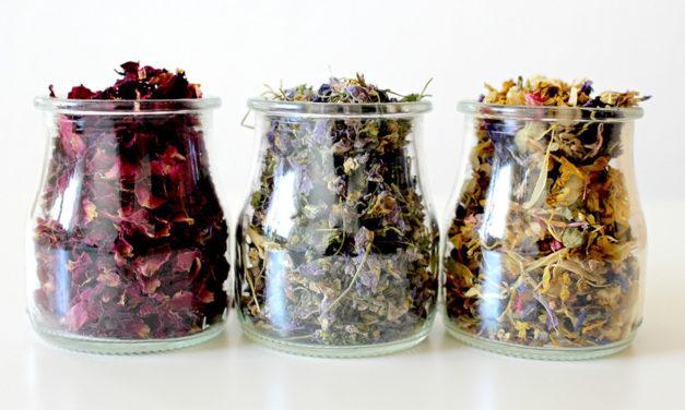 Warum Rosen so vielseitige Heilpflanzen sind