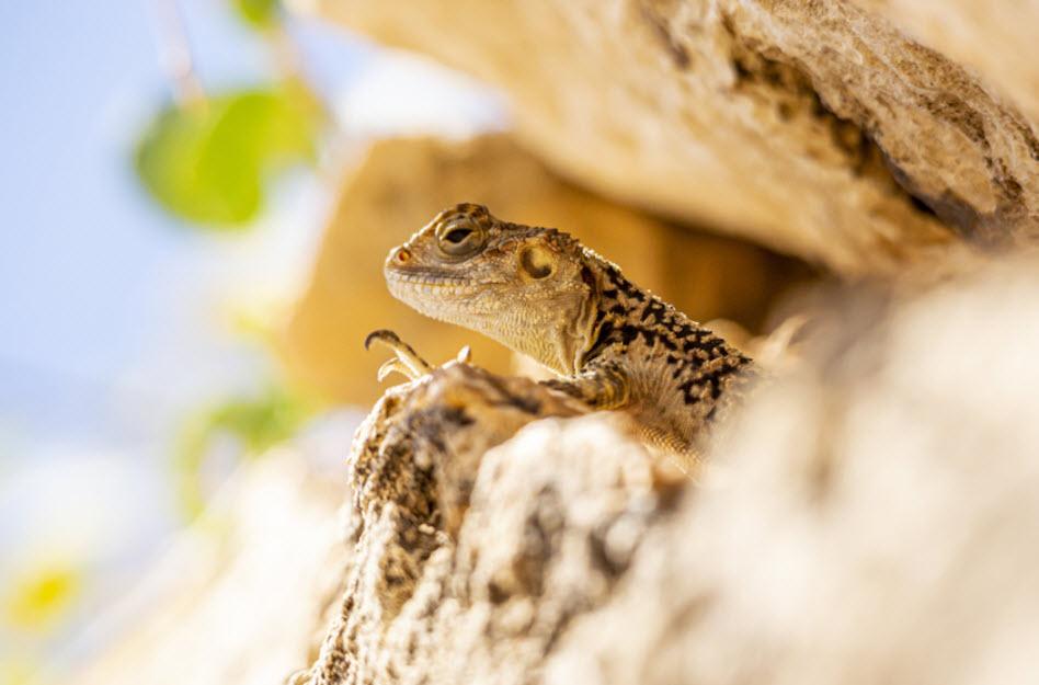 Infrarot Thermometer für Reptilien – die einfache Lösung